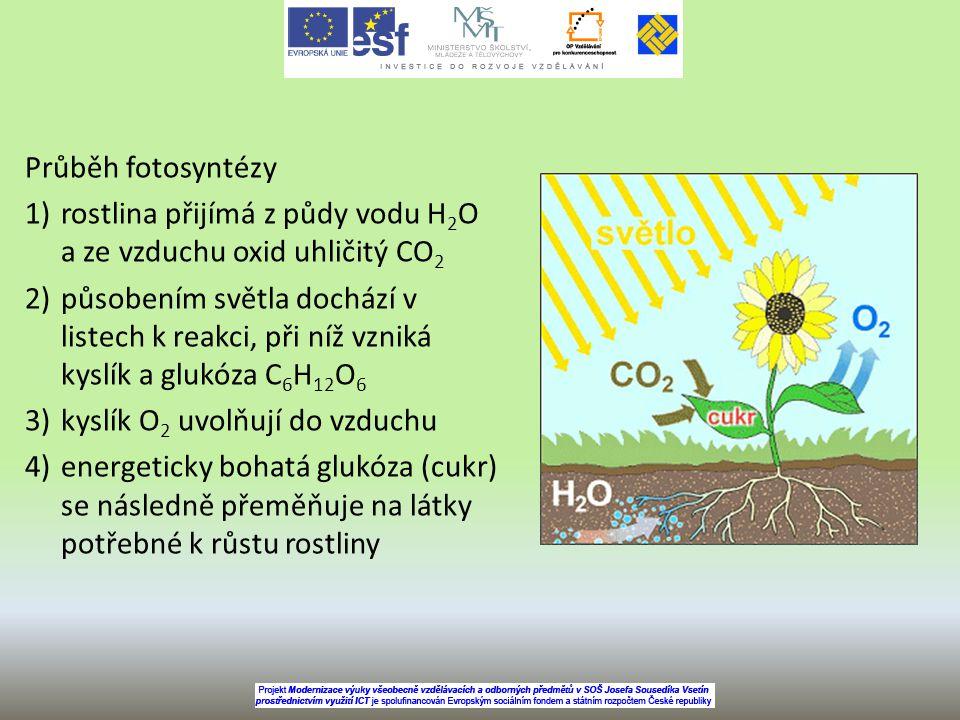 Průběh fotosyntézy 1)rostlina přijímá z půdy vodu H 2 O a ze vzduchu oxid uhličitý CO 2 2)působením světla dochází v listech k reakci, při níž vzniká kyslík a glukóza C 6 H 12 O 6 3)kyslík O 2 uvolňují do vzduchu 4)energeticky bohatá glukóza (cukr) se následně přeměňuje na látky potřebné k růstu rostliny