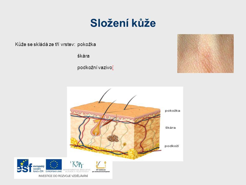 Složení kůže Kůže se skládá ze tří vrstev: pokožka škára podkožní vazivo[[