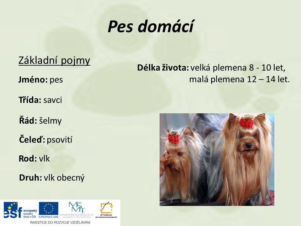 Základní pojmy Pes domácí Jméno: pes Třída: savci Řád: šelmy Čeleď: psovití Délka života: velká plemena 8 - 10 let, malá plemena 12 – 14 let.