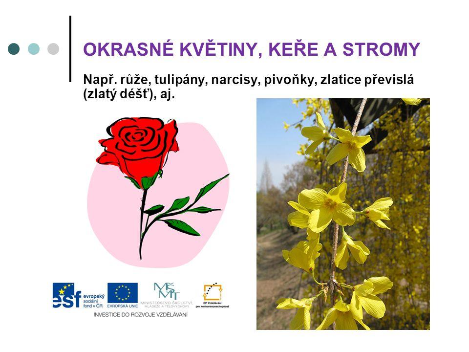 Např. růže, tulipány, narcisy, pivoňky, zlatice převislá (zlatý déšť), aj. OKRASNÉ KVĚTINY, KEŘE A STROMY