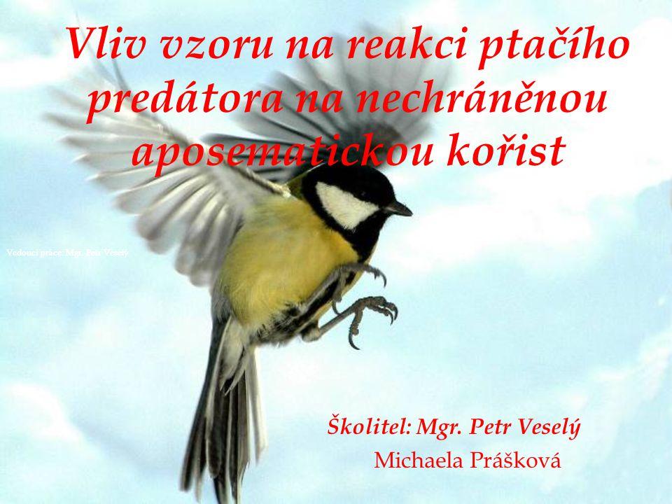 Vliv vzoru na reakci ptačího predátora na nechráněnou aposematickou kořist Školitel: Mgr.