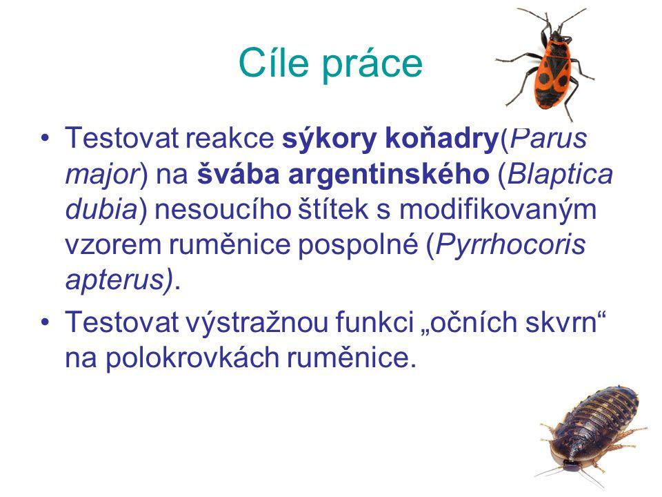 Cíle práce Testovat reakce sýkory koňadry(Parus major) na švába argentinského (Blaptica dubia) nesoucího štítek s modifikovaným vzorem ruměnice pospolné (Pyrrhocoris apterus).