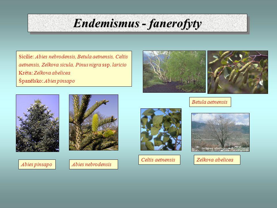Endemismus - fanerofyty Sicílie: Abies nebrodensis, Betula aetnensis, Celtis aetnensis, Zelkova sicula, Pinus nigra ssp.