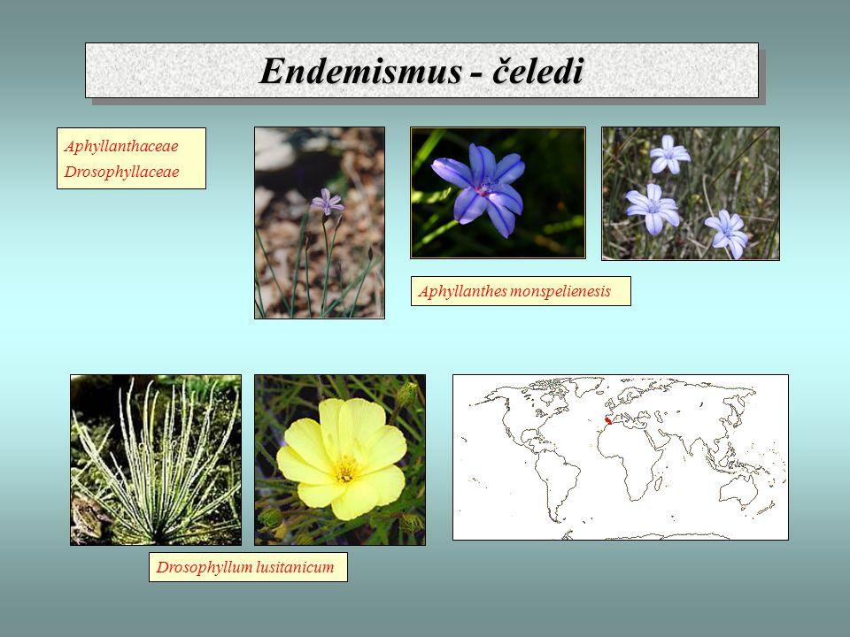 Endemismus - čeledi Aphyllanthaceae Drosophyllaceae Drosophyllum lusitanicum Aphyllanthes monspelienesis