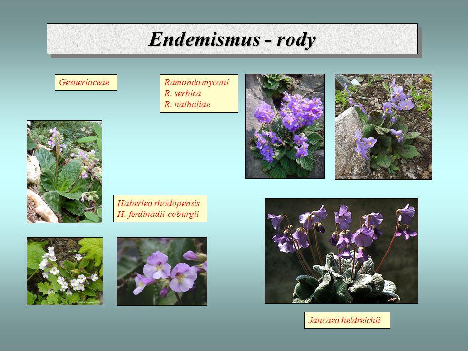 Endemismus - rody Haberlea rhodopensis H. ferdinadii-coburgii Jancaea heldreichii Ramonda myconi R. serbica R. nathaliae Gesneriaceae
