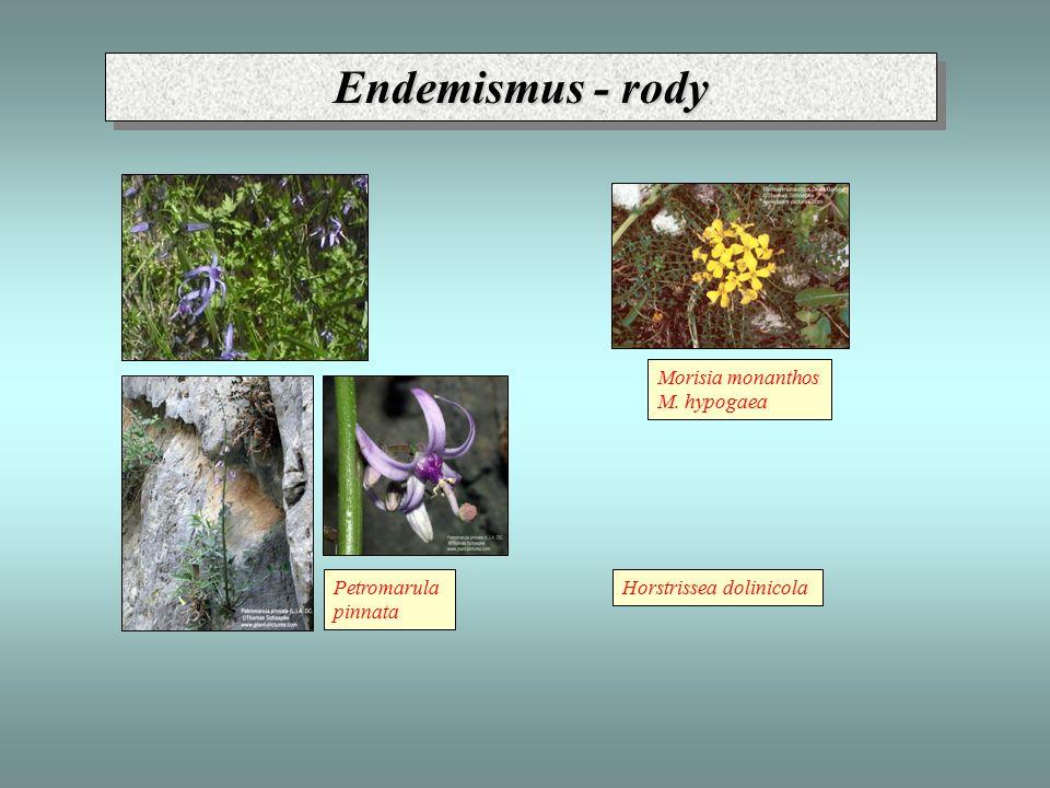 Endemismus - rody Horstrissea dolinicolaPetromarula pinnata Morisia monanthos M. hypogaea