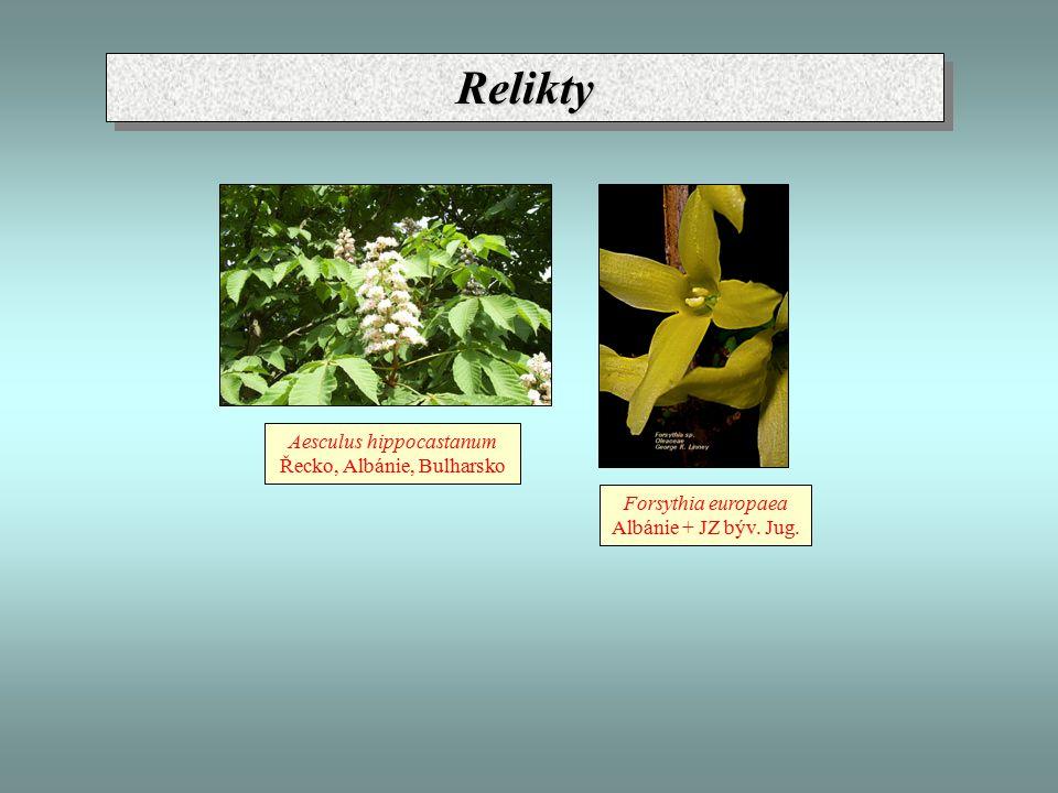 ReliktyRelikty Aesculus hippocastanum Řecko, Albánie, Bulharsko Forsythia europaea Albánie + JZ býv. Jug.