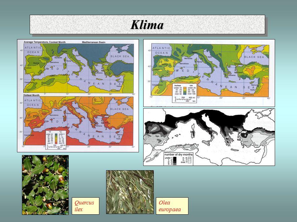 KlimaKlima - mediteránní podnebí: 3 mil.
