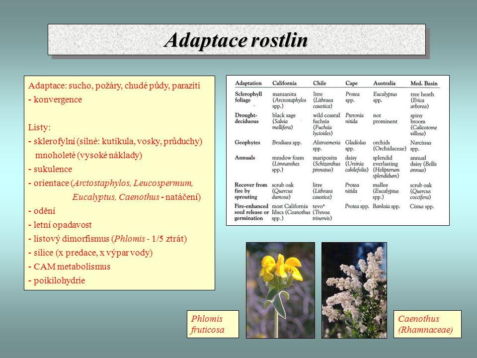 Adaptace rostlin Adaptace: sucho, požáry, chudé půdy, paraziti - konvergence Listy: - sklerofylní (silné: kutikula, vosky, průduchy) mnoholeté (vysoké náklady) - sukulence - orientace (Arctostaphylos, Leucospermum, Eucalyptus, Caenothus - natáčení) - odění - letní opadavost - listový dimorfismus (Phlomis - 1/5 ztrát) - silice (x predace, x výpar vody) - CAM metabolismus - poikilohydrie Caenothus (Rhamnaceae) Phlomis fruticosa