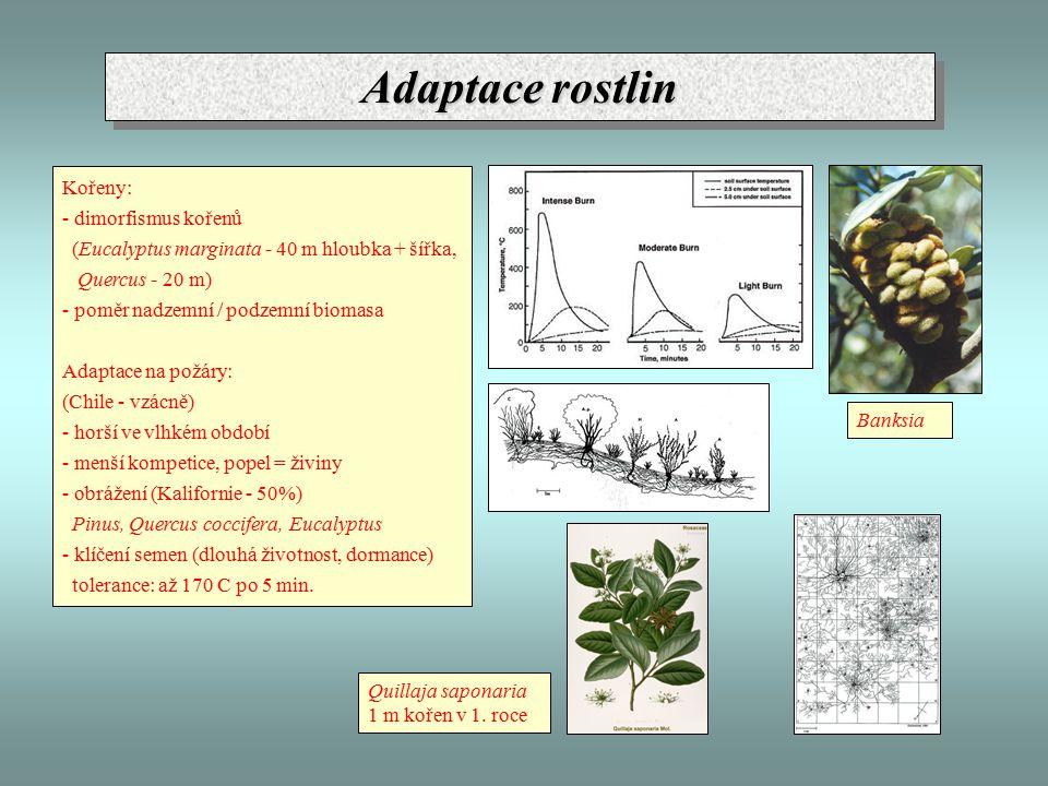 Adaptace rostlin Kořeny: - dimorfismus kořenů (Eucalyptus marginata - 40 m hloubka + šířka, Quercus - 20 m) - poměr nadzemní / podzemní biomasa Adaptace na požáry: (Chile - vzácně) - horší ve vlhkém období - menší kompetice, popel = živiny - obrážení (Kalifornie - 50%) Pinus, Quercus coccifera, Eucalyptus - klíčení semen (dlouhá životnost, dormance) tolerance: až 170 C po 5 min.