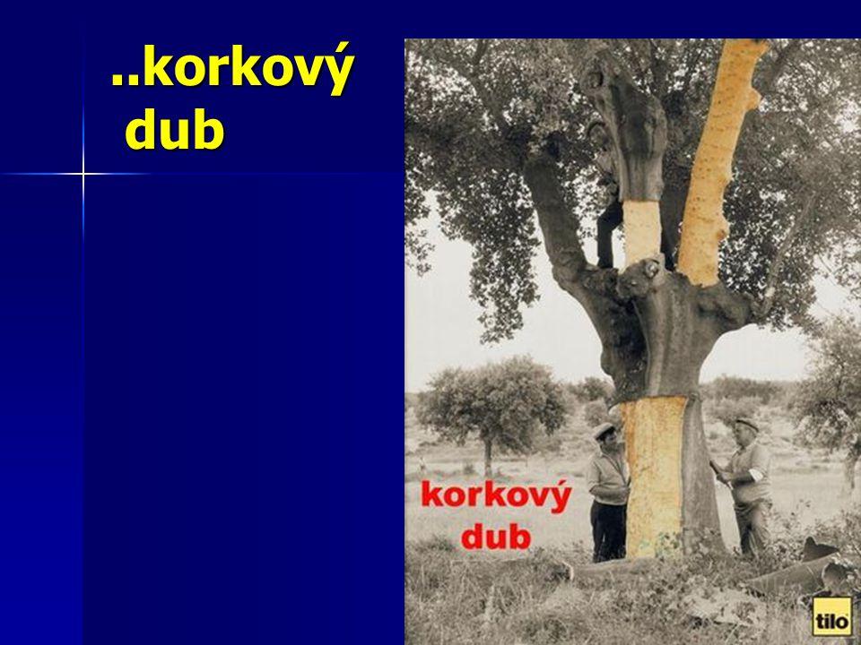 ..korkový dub