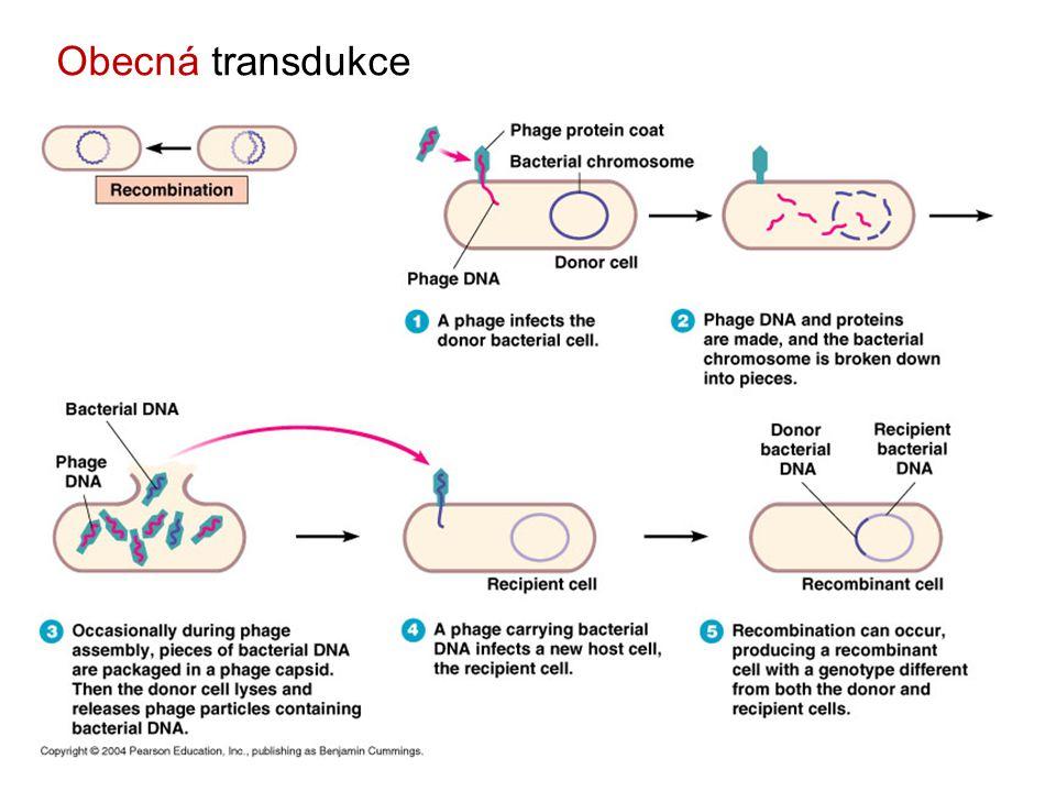 Obecná transdukce