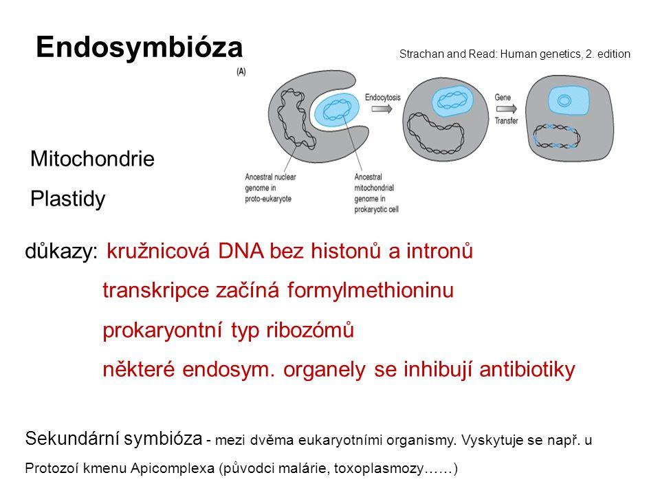 Endosymbióza důkazy: kružnicová DNA bez histonů a intronů transkripce začíná formylmethioninu prokaryontní typ ribozómů některé endosym. organely se i