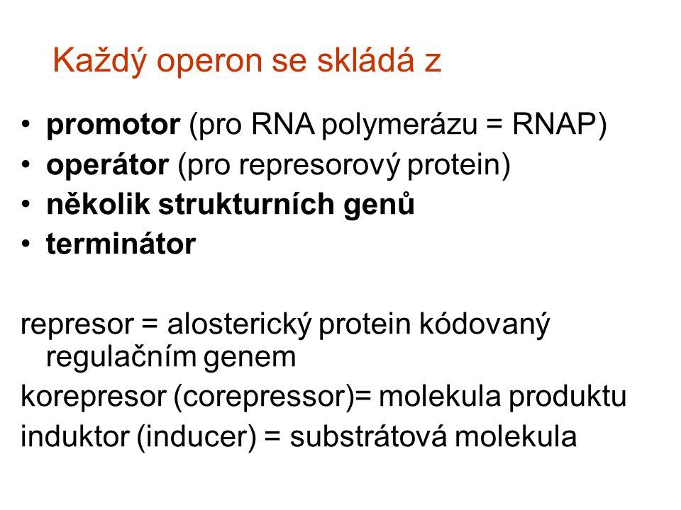 Každý operon se skládá z promotor (pro RNA polymerázu = RNAP) operátor (pro represorový protein) několik strukturních genů terminátor represor = alost