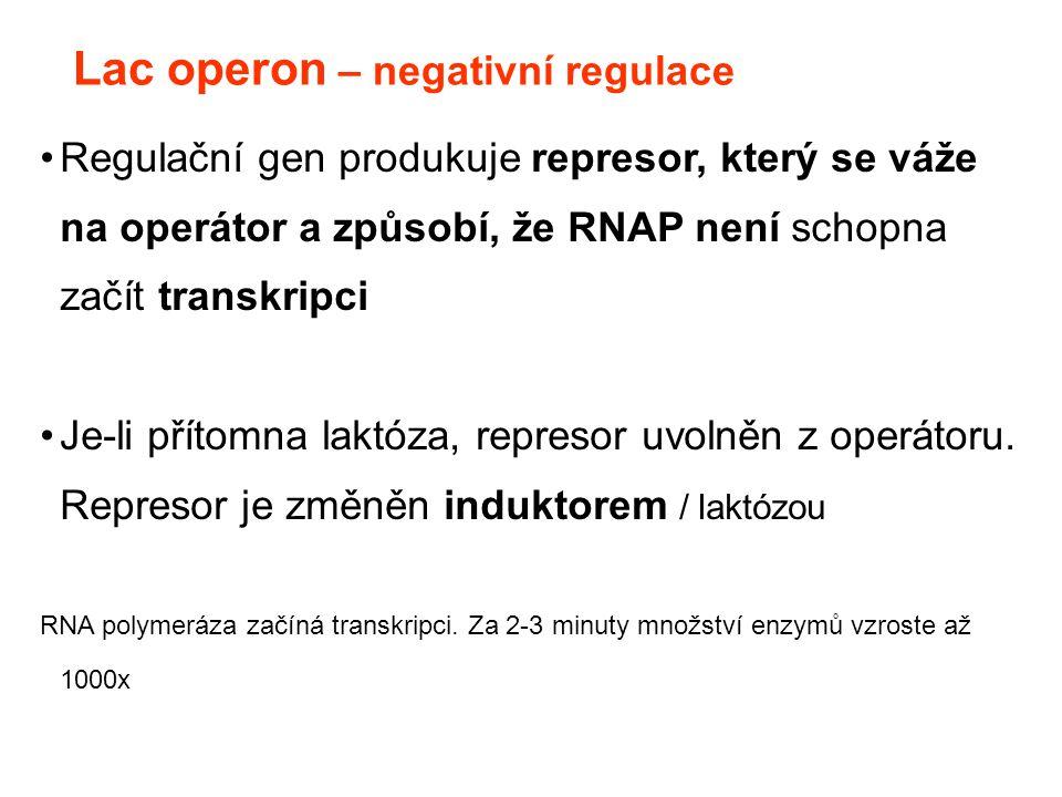 Lac operon – negativní regulace Regulační gen produkuje represor, který se váže na operátor a způsobí, že RNAP není schopna začít transkripci Je-li př