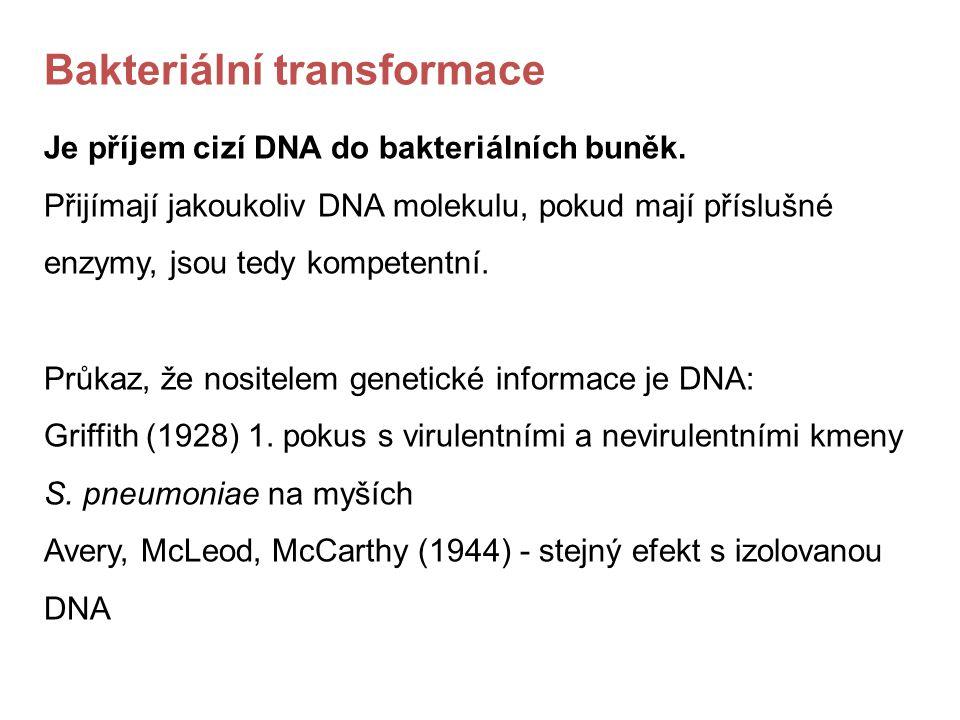 Bakteriální transformace Je příjem cizí DNA do bakteriálních buněk. Přijímají jakoukoliv DNA molekulu, pokud mají příslušné enzymy, jsou tedy kompeten