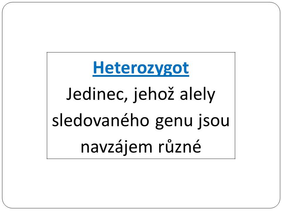 Heterozygot Jedinec, jehož alely sledovaného genu jsou navzájem různé