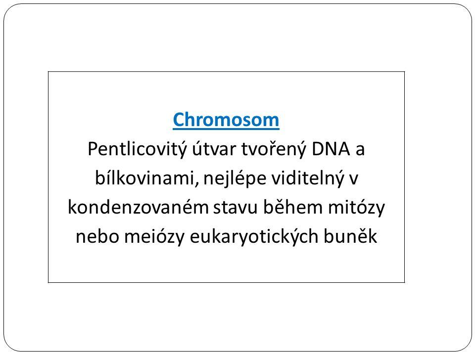 Chromosom Pentlicovitý útvar tvořený DNA a bílkovinami, nejlépe viditelný v kondenzovaném stavu během mitózy nebo meiózy eukaryotických buněk