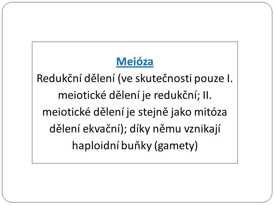 Meióza Redukční dělení (ve skutečnosti pouze I. meiotické dělení je redukční; II. meiotické dělení je stejně jako mitóza dělení ekvační); díky němu vz