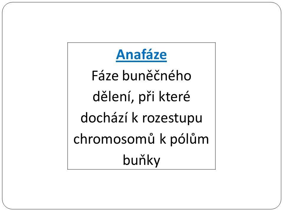 Anafáze Fáze buněčného dělení, při které dochází k rozestupu chromosomů k pólům buňky