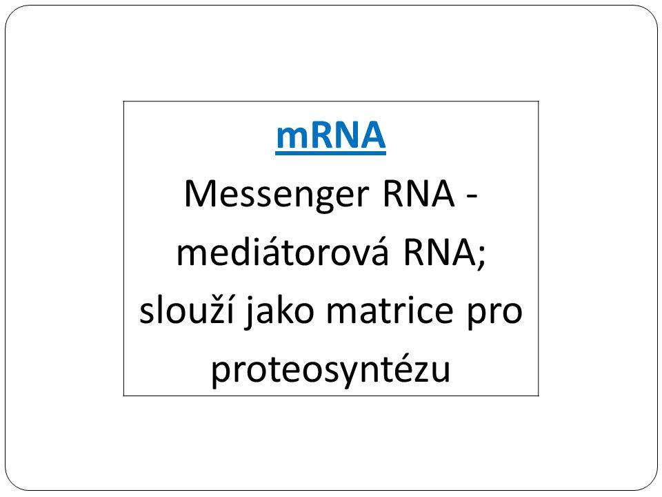 mRNA Messenger RNA - mediátorová RNA; slouží jako matrice pro proteosyntézu