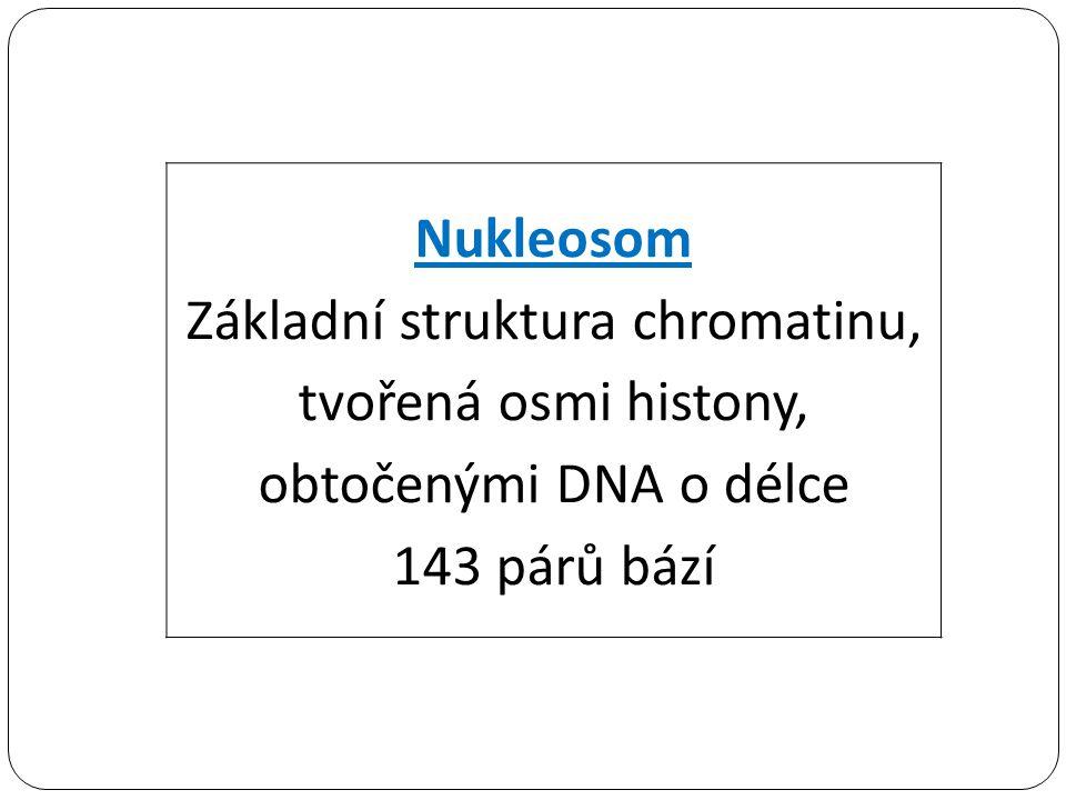 Nukleosom Základní struktura chromatinu, tvořená osmi histony, obtočenými DNA o délce 143 párů bází