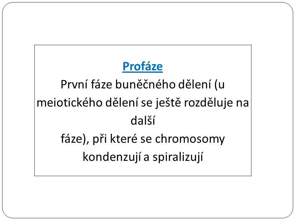 Profáze První fáze buněčného dělení (u meiotického dělení se ještě rozděluje na další fáze), při které se chromosomy kondenzují a spiralizují