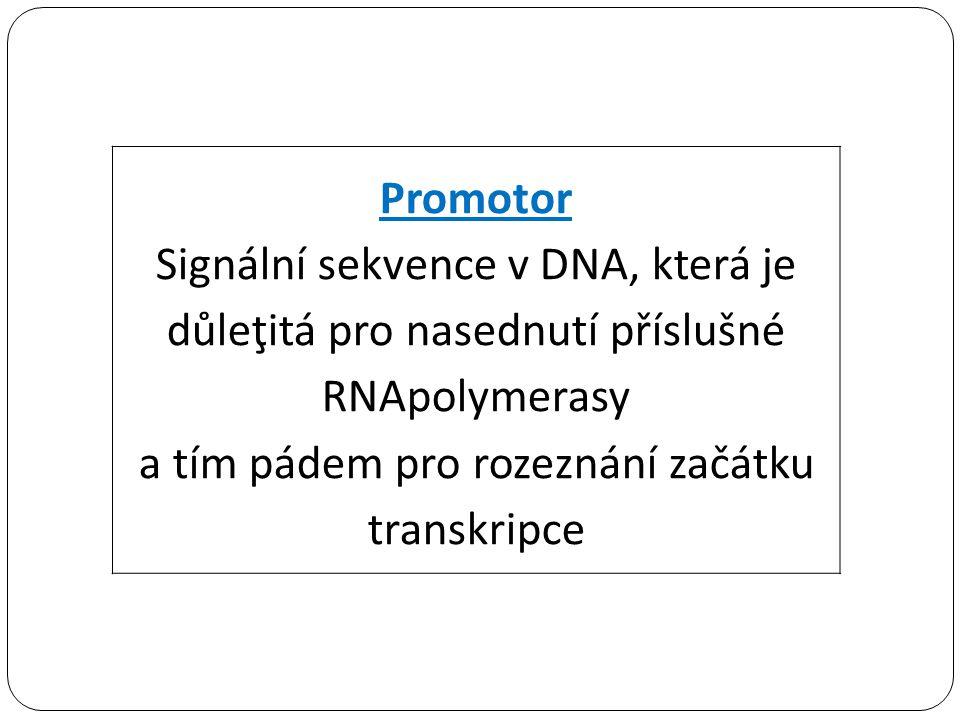 Promotor Signální sekvence v DNA, která je důleţitá pro nasednutí příslušné RNApolymerasy a tím pádem pro rozeznání začátku transkripce