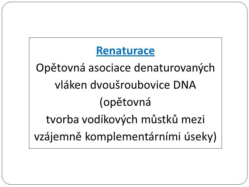 Renaturace Opětovná asociace denaturovaných vláken dvoušroubovice DNA (opětovná tvorba vodíkových můstků mezi vzájemně komplementárními úseky)