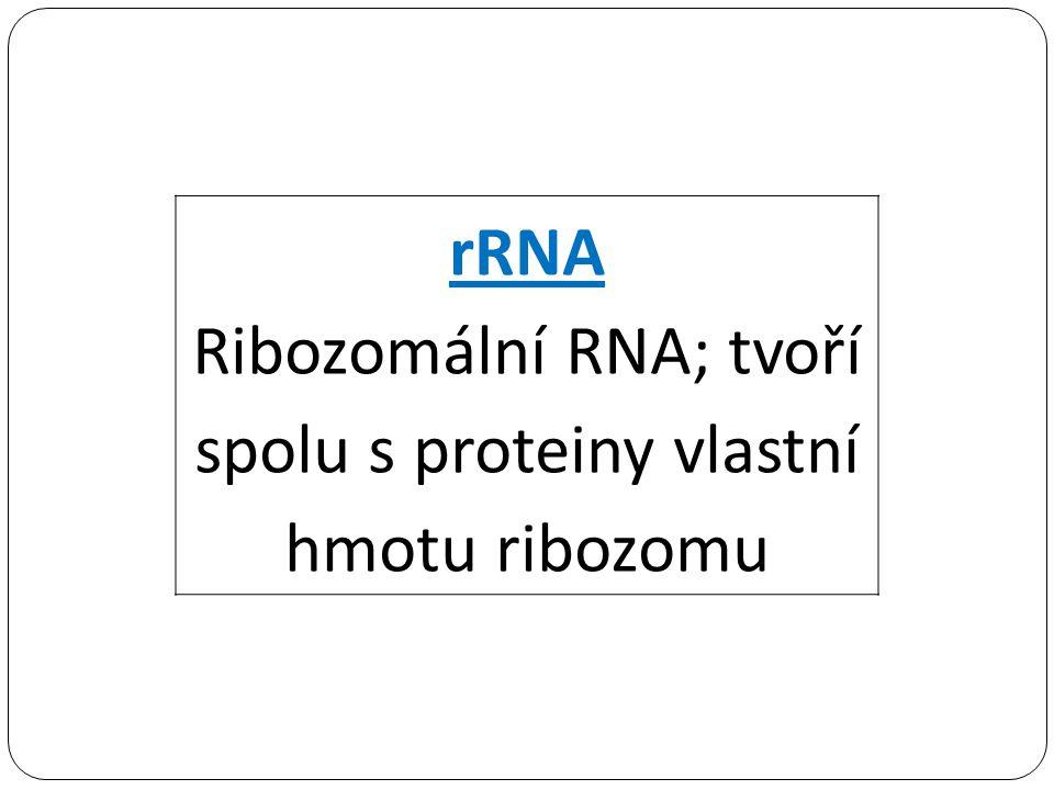 rRNA Ribozomální RNA; tvoří spolu s proteiny vlastní hmotu ribozomu