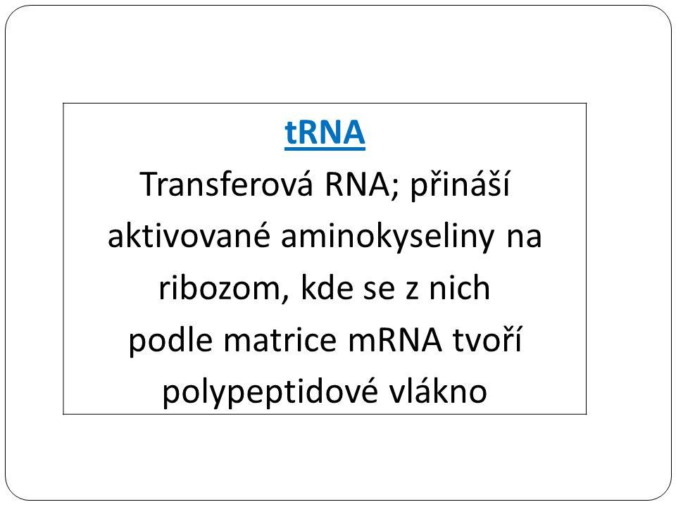 tRNA Transferová RNA; přináší aktivované aminokyseliny na ribozom, kde se z nich podle matrice mRNA tvoří polypeptidové vlákno