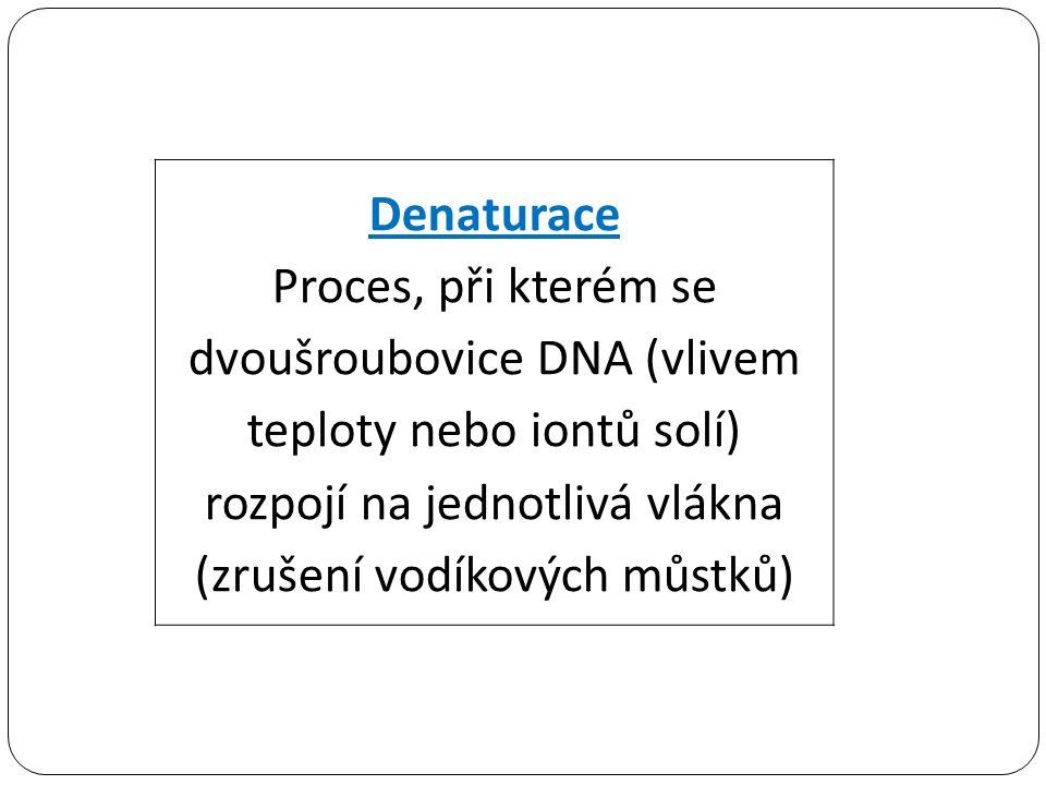 Denaturace Proces, při kterém se dvoušroubovice DNA (vlivem teploty nebo iontů solí) rozpojí na jednotlivá vlákna (zrušení vodíkových můstků)
