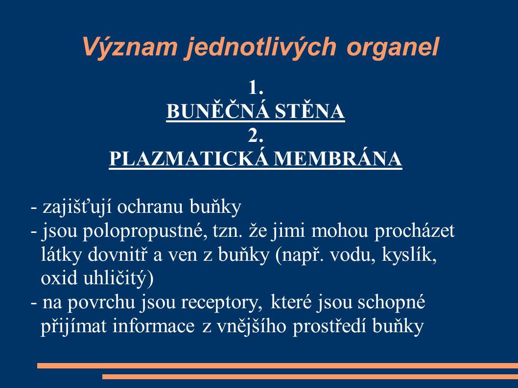 Význam jednotlivých organel 3.