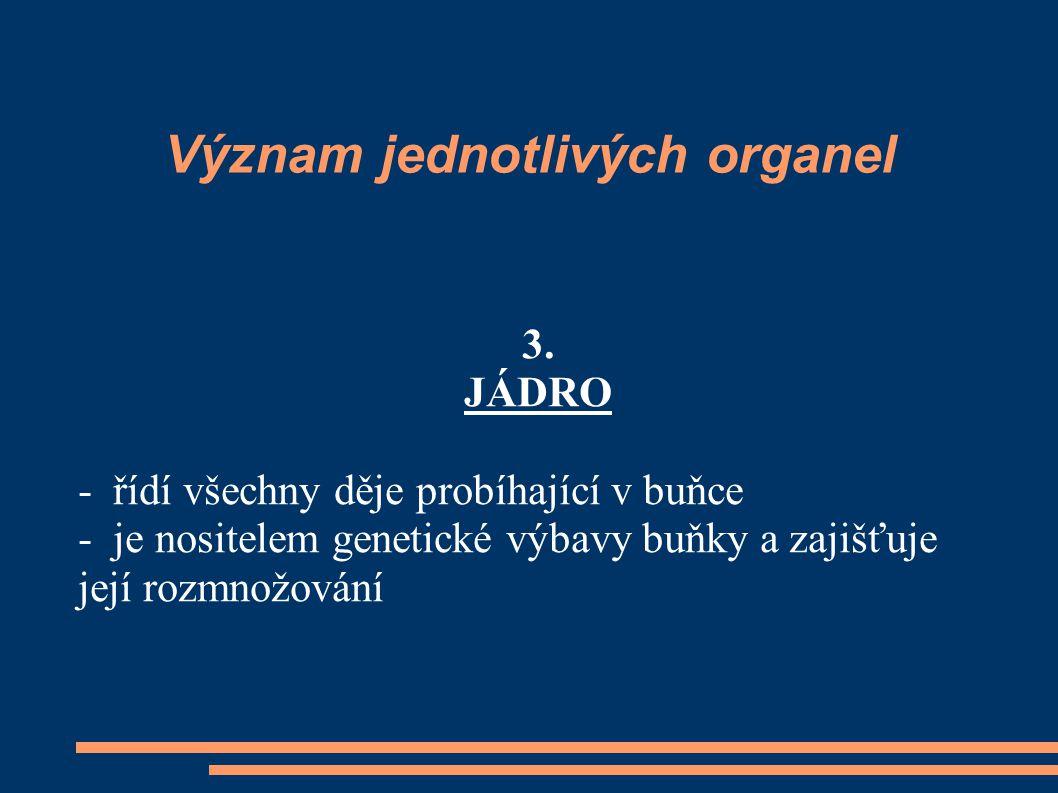 Význam jednotlivých organel 4.