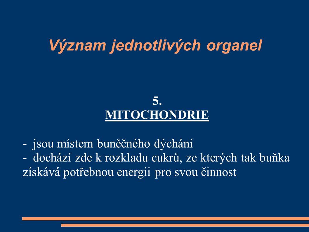 Význam jednotlivých organel 5. MITOCHONDRIE - jsou místem buněčného dýchání - dochází zde k rozkladu cukrů, ze kterých tak buňka získává potřebnou ene