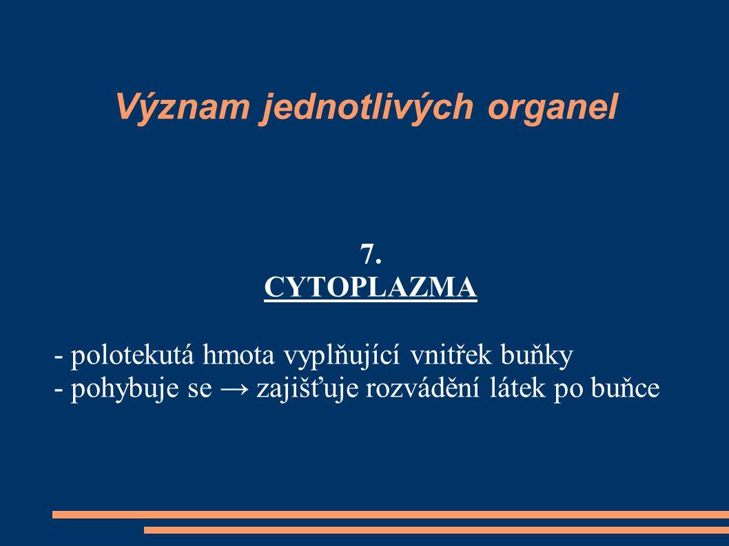 Význam jednotlivých organel 7. CYTOPLAZMA - polotekutá hmota vyplňující vnitřek buňky - pohybuje se → zajišťuje rozvádění látek po buňce