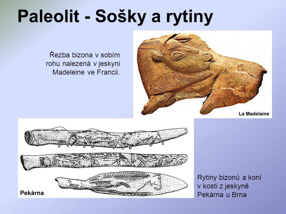 Paleolit - Sošky a rytiny Řezba bizona v sobím rohu nalezená v jeskyni Madeleine ve Francii. Rytiny bizonů a koní v kosti z jeskyně Pekárna u Brna