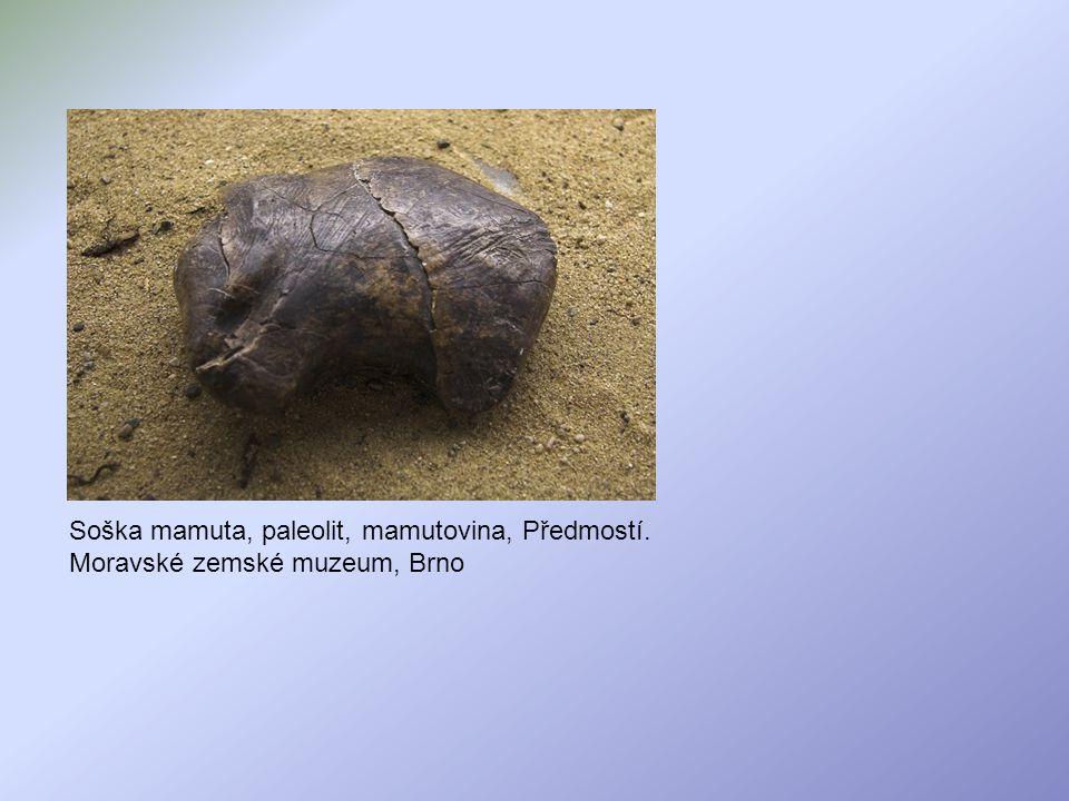 Mapa jeskynních maleb Nejznámější jeskyně jsou Altamira, Lascaux (čti - Laskó), Les Trois Fréres (Jeskyně tří bratří), Niaux a nověji objevená a nejstarší Chauvet (čti - Šovet).