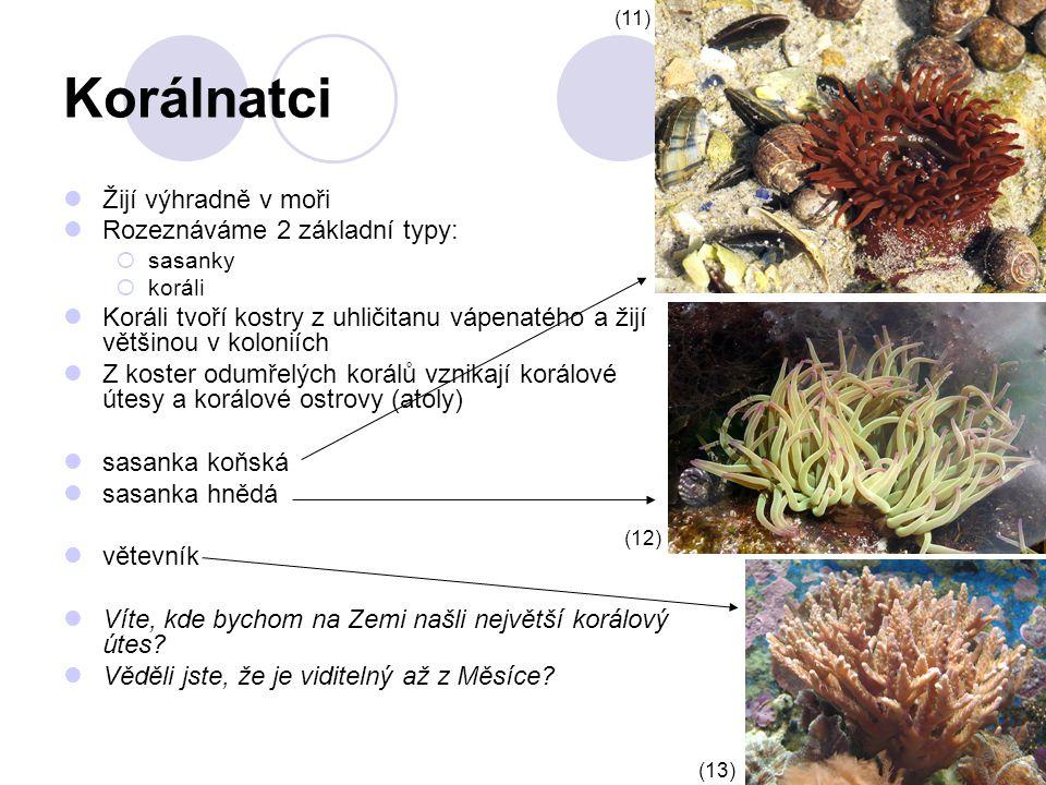 Korálnatci Žijí výhradně v moři Rozeznáváme 2 základní typy:  sasanky  koráli Koráli tvoří kostry z uhličitanu vápenatého a žijí většinou v koloniích Z koster odumřelých korálů vznikají korálové útesy a korálové ostrovy (atoly) sasanka koňská sasanka hnědá větevník Víte, kde bychom na Zemi našli největší korálový útes.