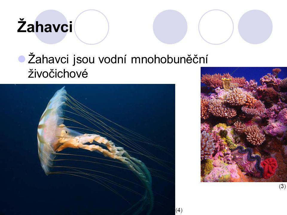 Žahavci Žahavci jsou vodní mnohobuněční živočichové (4) (3)