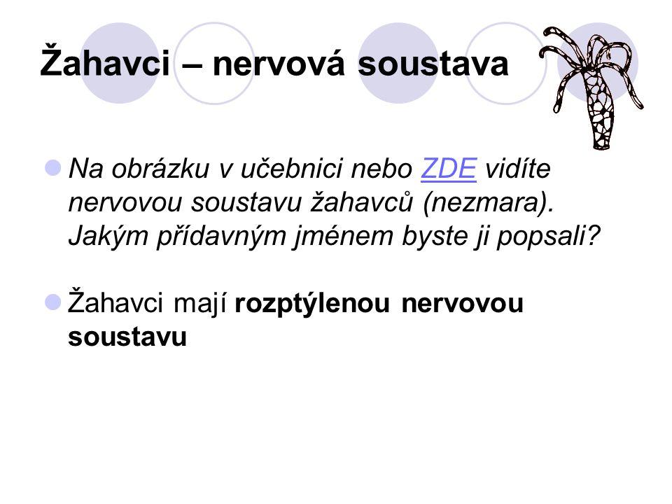 Žahavci – nervová soustava Na obrázku v učebnici nebo ZDE vidíte nervovou soustavu žahavců (nezmara).