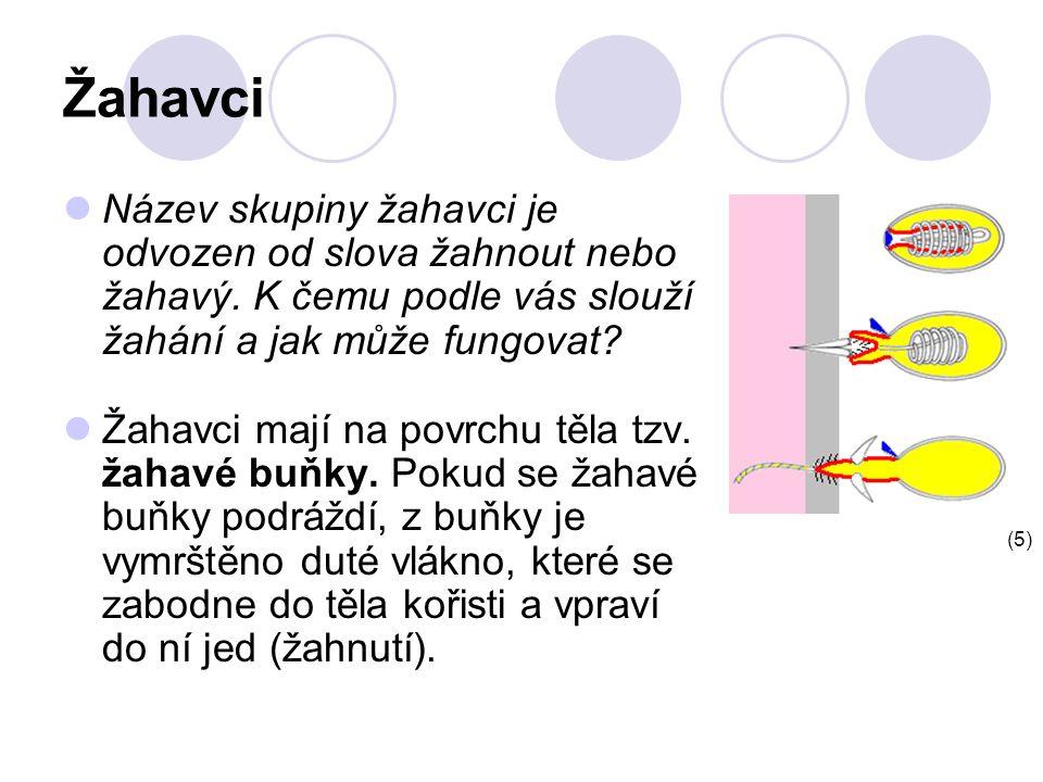 Žahavci Název skupiny žahavci je odvozen od slova žahnout nebo žahavý.
