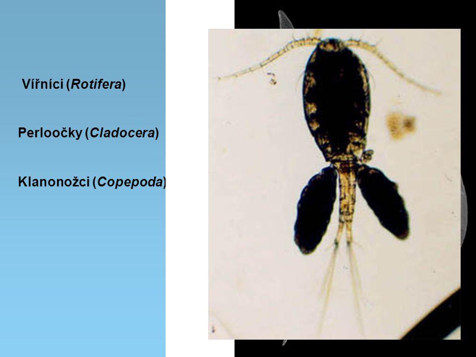 Vířníci (Rotifera) Klanonožci (Copepoda) Perloočky (Cladocera)