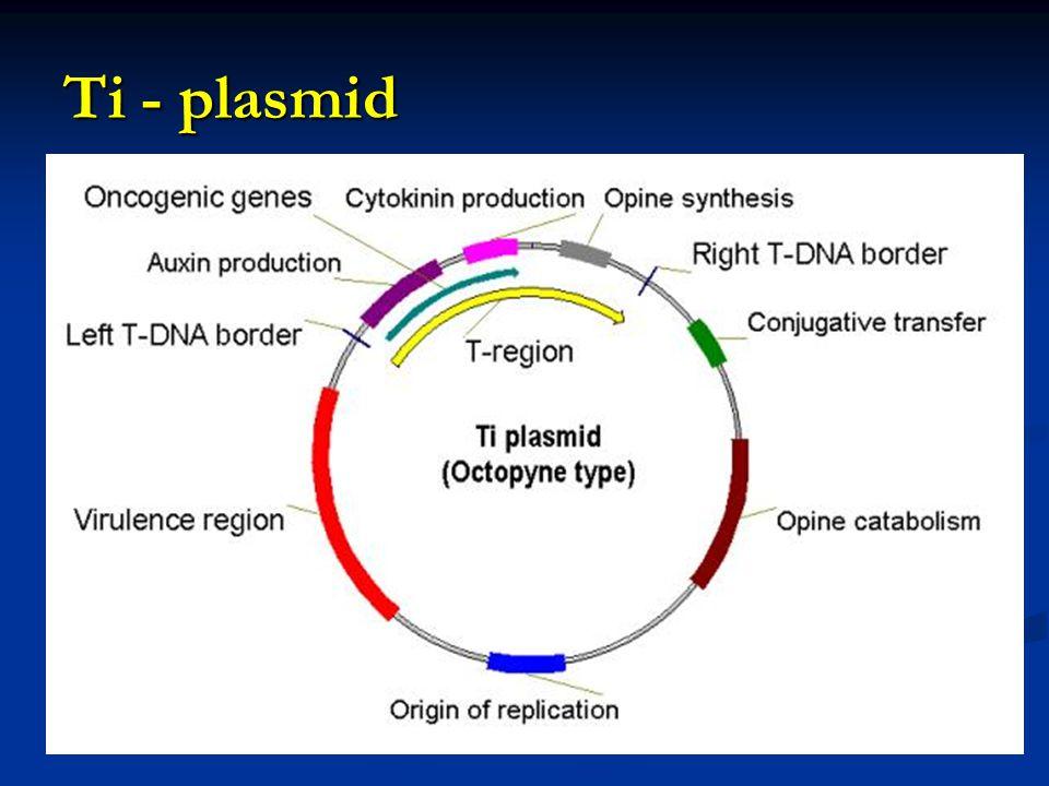 Geneticky modifikované A.