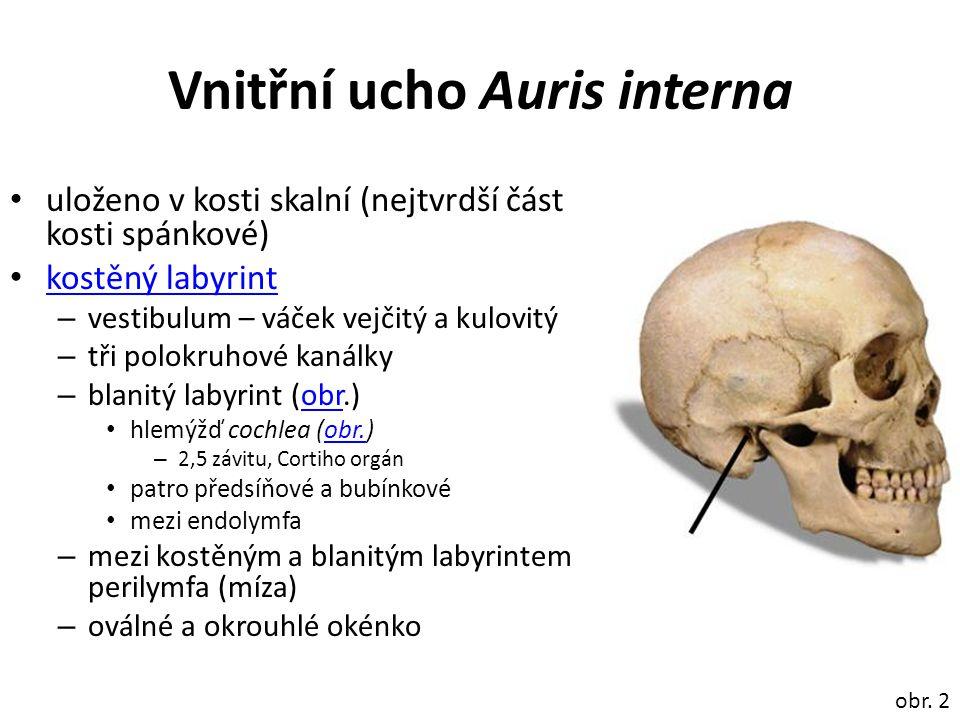 Vnitřní ucho Auris interna uloženo v kosti skalní (nejtvrdší část kosti spánkové) kostěný labyrint – vestibulum – váček vejčitý a kulovitý – tři polokruhové kanálky – blanitý labyrint (obr.)obr hlemýžď cochlea (obr.)obr.