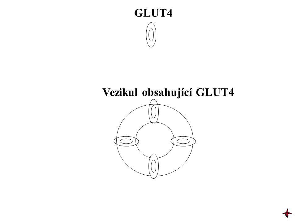 GLUT4 Vezikul obsahující GLUT4 c