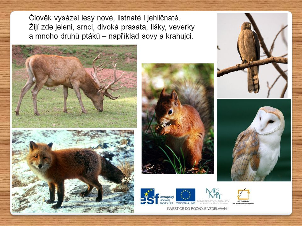 Člověk vysázel lesy nové, listnaté i jehličnaté. Žijí zde jeleni, srnci, divoká prasata, lišky, veverky a mnoho druhů ptáků – například sovy a krahujc