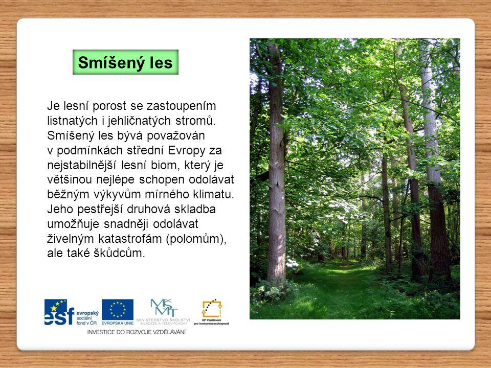Je lesní porost se zastoupením listnatých i jehličnatých stromů.