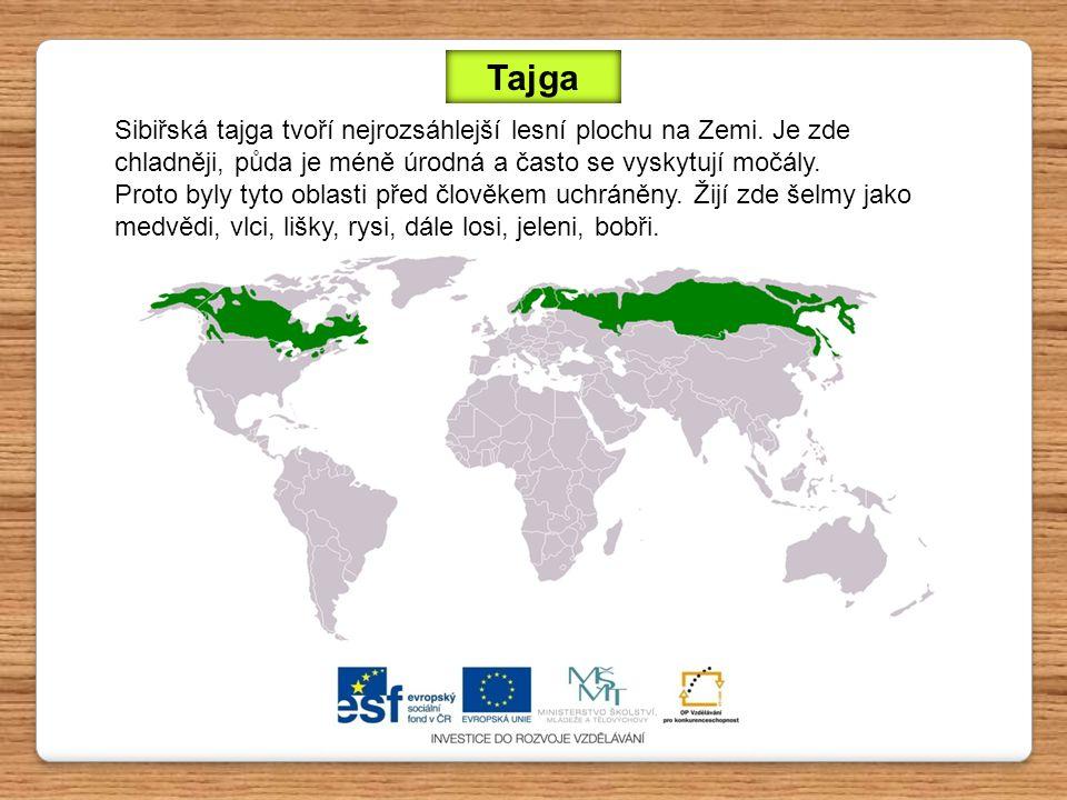 Sibiřská tajga tvoří nejrozsáhlejší lesní plochu na Zemi. Je zde chladněji, půda je méně úrodná a často se vyskytují močály. Proto byly tyto oblasti p