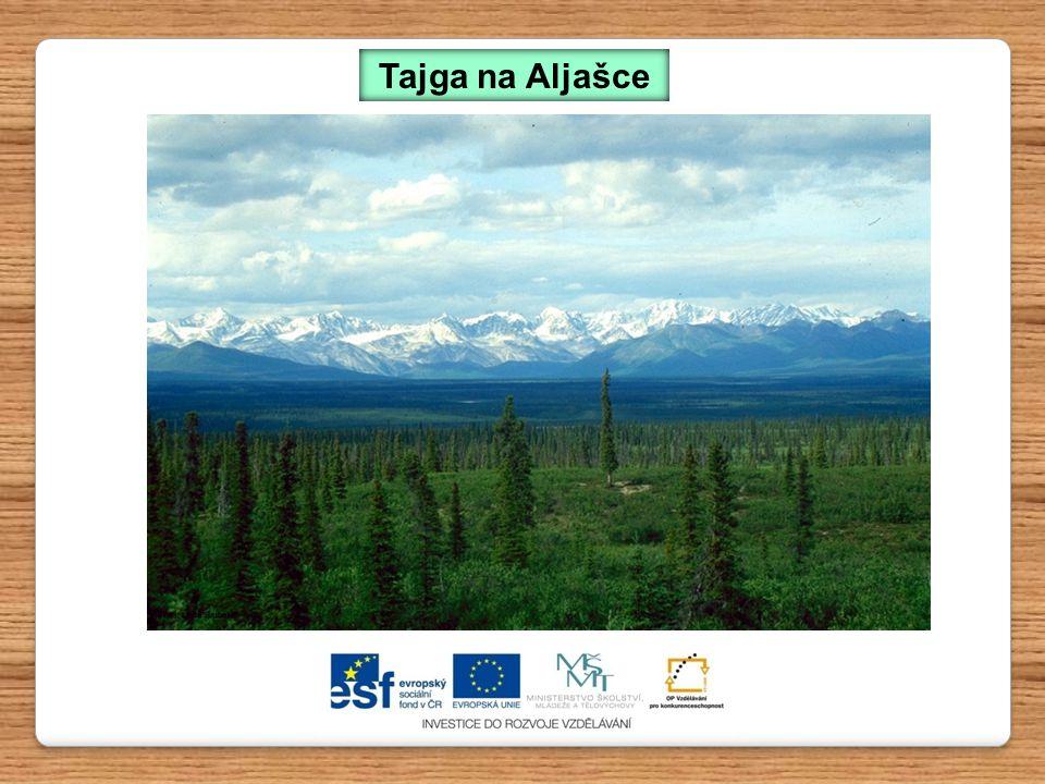 Tajga na Aljašce